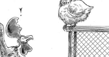 """كاريكاتير الصحف الاماراتية .. محاولة دجاجة تقليد صياح الديوك فى اشارة للديك الفرنسى """"موريس"""""""