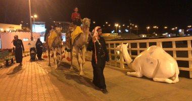 صور.. استعراضات ليلية بالإبل لإسعاد الأطفال والأسر فى السعودية