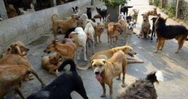 انتشار الكلاب الضالة يهدد سكان مدينة العبور