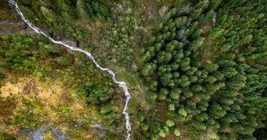 """ترامب يقترح إلغاء حظر قطع أشجار غابة بـ""""ألاسكا"""" وتحذيرات بيئية.. اعرف القصة"""