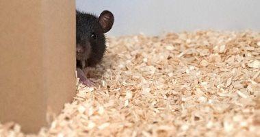 دراسة جديدة على سلوك الحيوانات تكشف أسرارًا جديدة عن طبيعتها