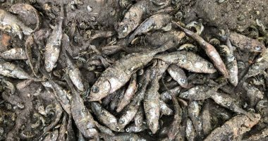 أزمة جديدة لتغير المناخ..موت مئات الأسماك بعد جفاف نهر في بريطانيا