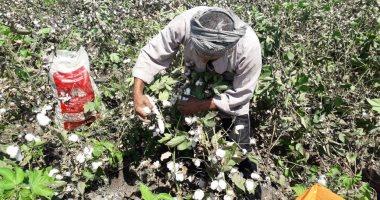الزراعة: انضمام مصر لمبادرة إنتاج القطن واستمرار عمليات تصدير طرود النحل