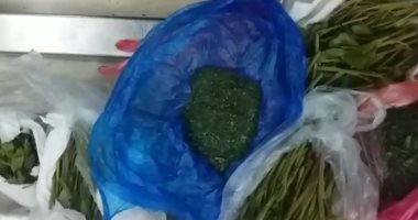 """ضبط راكب بمطار القاهرة حاول تهريب كمية من نبات """"القات"""" المخدر"""