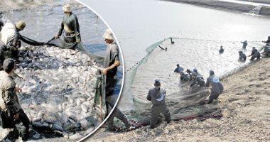 الجمبرى «الفانمى» فى مهمة حماية أسماك البورى.. «الزراعة» تواجه الطفيليات لزيادة الإنتاج.. تطوير البحيرات الشمالية واستهداف 1.9 مليون طن خلال 2019.. وهيئة الثروة السمكية تخطط لتصدير الأسماك إلى أسواق جديدة