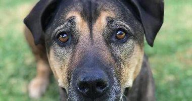 أستراليا تتجه لتخصيص بدل أجازة للموظفين لرعاية حيواناتهم المريضة