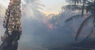 صور.. حريق هائل فى مزارع نخيل بالوادى الجديد والدفاع المدنى يكافح النيران