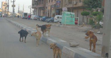 مكافحة 320 كلب ضال بكفر الشيخ