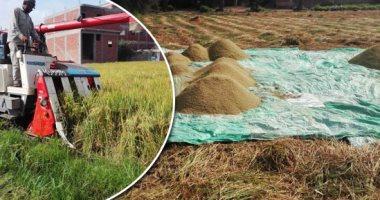 """""""الزراعة"""" تحدد 5 توصيات لمزارعى الأرز  خلال يونيو.. تعرف عليها"""