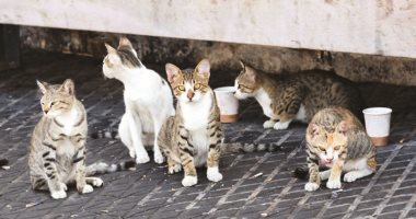 إنخفاض أعداد القطط الضالة-أرشيفية