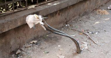 شركة الكهرباء تستجيب لصحافة المواطن: تم عمل صيانة أعمدة شبين القناطر