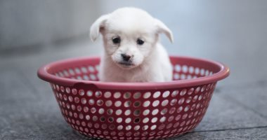 علماء أمريكيون: تأثير الكلاب إيجابى على صحة أصحابها