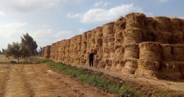 البيئة تجمع 140426 طن قش أرز وتحرر 160 محضر حرق مخلفات زراعية