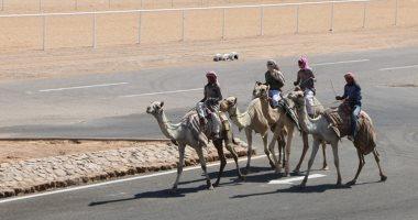 صور.. 10 معلومات عن سباق الهجن بمدينة شرم الشيخ