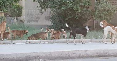 شكوى من انتشار الكلاب الضالة بالتجمع الأول .. صور