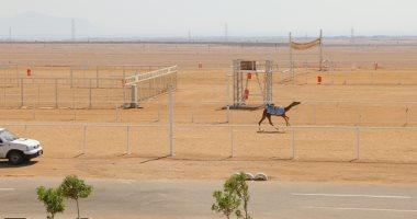 20 فبراير .. موعد انطلاق مهرجان شرم الشيخ الرابع للهجن برعاية الإمارات
