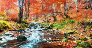 الألوان النارية تسود المشهد.. لو بتحب الخريف يبقى لازم تزور الأماكن دى.. صور