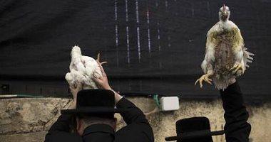 """10 عادات غريبة لليهود فى """"عيد الغفران"""" أبرزها وضع الدواجن على الرأس"""