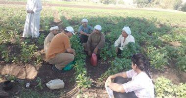 """الزراعة تضع روشتة لإنقاذ محصول البطاطس من """"السرولة"""" .. اعرف التفاصيل"""