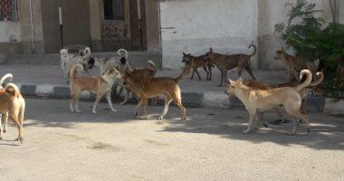 شكوى من انتشار الكلاب الضالة بجسر البحر فى محافظة القاهرة