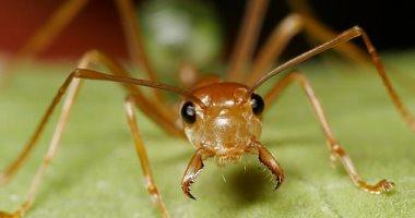 باحثون: تراجع في أعداد النمل والنحل والفراشات لكن البعوض في تزايد