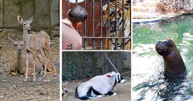 الزراعة: 10 آلاف زائر استقبلتها حديقة حيوان الجيزة باحتفالات عيد الميلاد