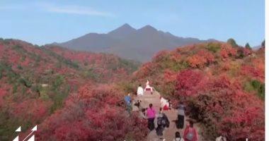 شاهد.. الخريف بمناظره الخلابة فى الصين