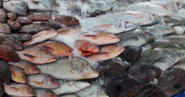 أسعار الأسماك بسوق العبور اليوم.. البورى يسجل 32-48 جنيها للكيلو