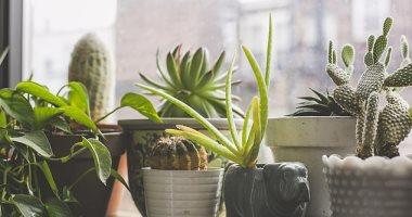 """دراسة تكشف: نباتات المنزل لا تحسن جودة الهواء بالداخل """"افتح الشباك أفضل"""""""