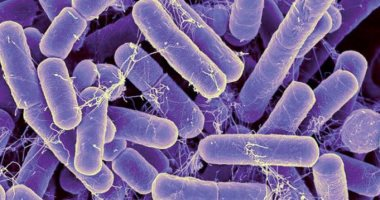 How do you keep your gut healthy while taking antibiotics?