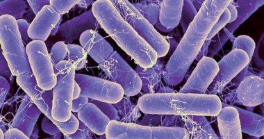 العلماء يكتشفون طريقة للقضاء على نمو البكتريا المسببة للأمراض المعدية