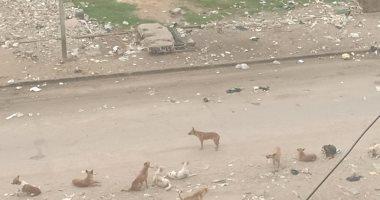 شكوى من انتشار الكلاب الضالة بمساكن أطلس الجديد السلام