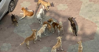 قارئ يشكو من انتشار الكلاب الضالة فى مدينة العبور