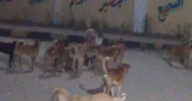 الزراعة: تحصين 2531 كلبا واستخراج 2377 رخصة خلال 30 يوما