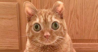 قط يحظى بـ50 ألف متابع على إنستجرام بسبب عينيه.. صور