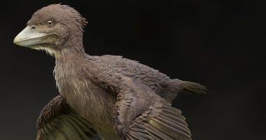 اكتشاف بقايا الطيور الصغيرة المصاحبة للديناصورات قبل 120 مليون سنة