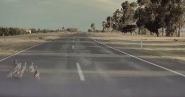 """نظام القيادة الآلية بسيارة تسلا ينقذ مجموعة """"بط"""" من الدهس.. فيديو"""