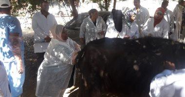 صور.. الزراعة تنظم حملة بيطرية إرشادية لمربى الماشية فى أسوان