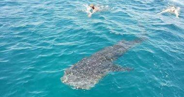 """تعليمات صارمة من محميات البحر الأحمر بعد واقعة صيد """"القرش الحوت"""" بالسويس"""