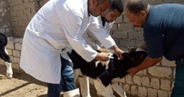 1.5 مليون جنيه دعما لحملة تحصين الثروة الحيوانية ضد الحمى القلاعية بمطروح