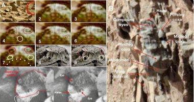 جامعة أوهايو تمسح تقريرا عن حشرات تعيش على المريخ.. اعرف القصة