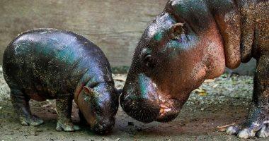 فيديو.. حديقة حيوان لندن تعود للعمل بعد أسابيع من الإغلاق بسبب كورونا
