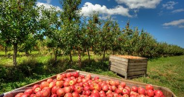 ابتكار أجهزة استشعار حيوية تنبه بنضج الفاكهة وتقلل من النفايات الغذائية