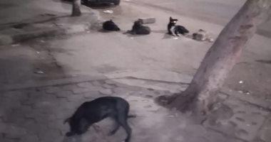 الكلاب الضالة تهدد أهالى حمامات القبة بميدان ابن سندر بالقاهرة