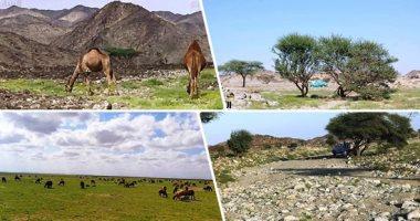 تخفيض رسوم دخول المحميات الطبيعية.. أهم قرارات وزارة البيئة لتشجيع السياحة
