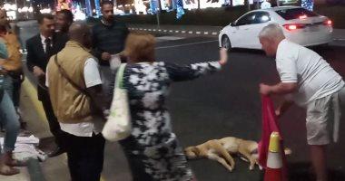 مهمه انقاذ كلب بلدى بشوارع شرم الشيخ