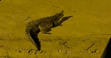 فيديو.. صاحبة صورة تمساح أكتوبر تكشف كواليس تجوله فى الشارع