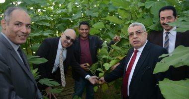 صور.. لأول مرة بجامعة طنطا إنتاج التين الإسبانى الأبيض بنظام الزراعة المكثفة
