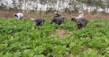 صور.. زراعة القطن وبنجر السكر بالمياه المالحة فى الأراضى شديدة الملوحة والقلوية