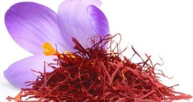 فوائد الزعفران تقليل فرص الإصابة بالسرطان وأمراض القلب